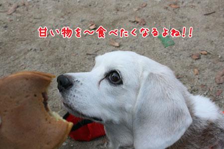 4_20091101141251.jpg