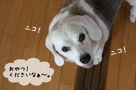 4_20091102152935.jpg