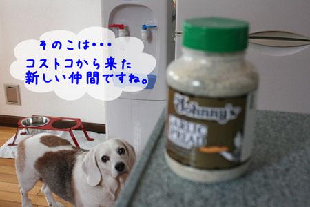 4_20091120145425.jpg