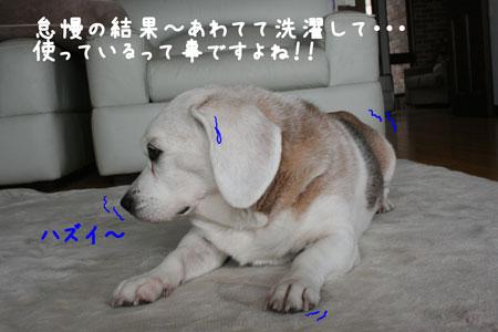 4_20091123120130.jpg