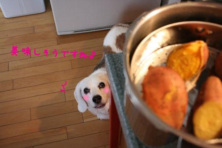 4_20091129164759.jpg