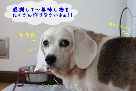 4_20091201163021.jpg