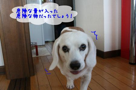4_20091204181002.jpg