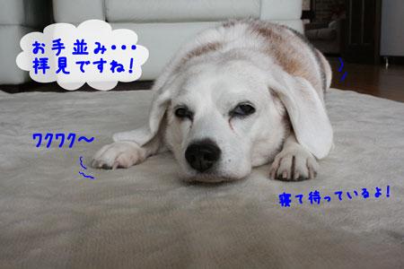 4_20091205145552.jpg