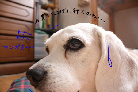 4_20091212135951.jpg