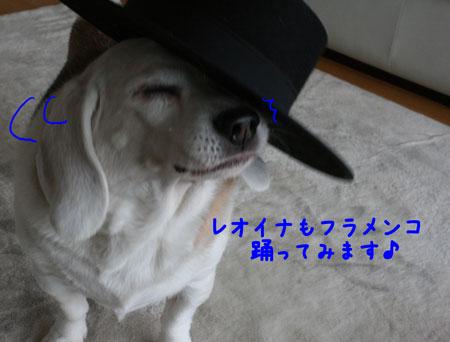 4_20091224210355.jpg