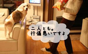 4_20100104183521.jpg