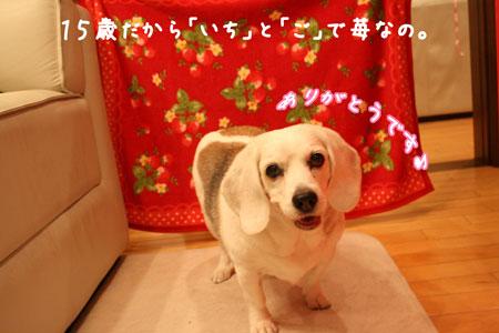 4_20100107203110.jpg