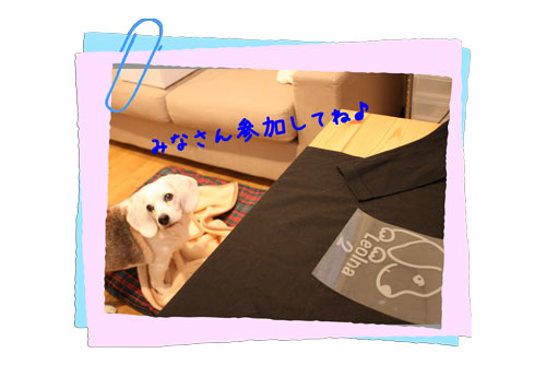4_20100113174440.jpg