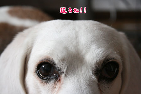 4_20100123114651.jpg