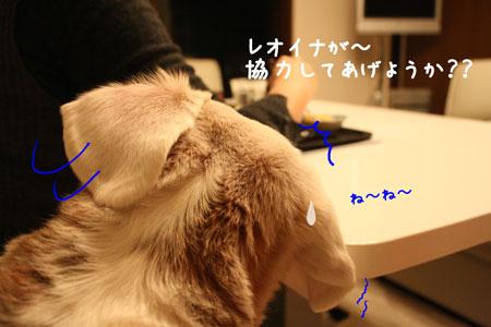 4_20100128144023.jpg