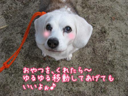 4_20100205151247.jpg