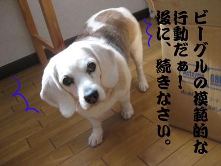 4_20100206135638.jpg