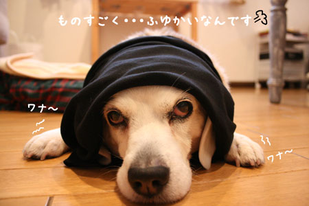 4_20100211133840.jpg