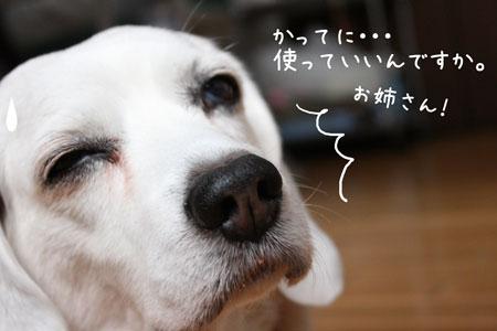 4_20100215172643.jpg