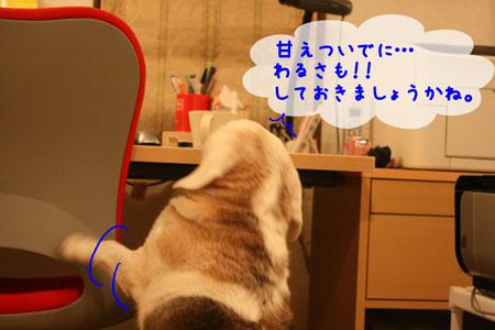 4_20100217183208.jpg