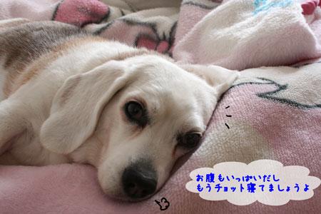 4_20100220114503.jpg