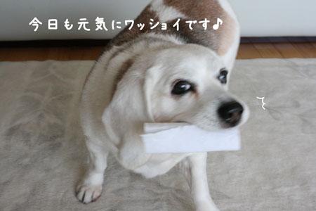 4_20100225141916.jpg
