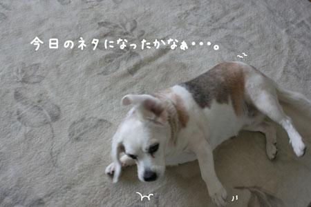 4_20100311161733.jpg