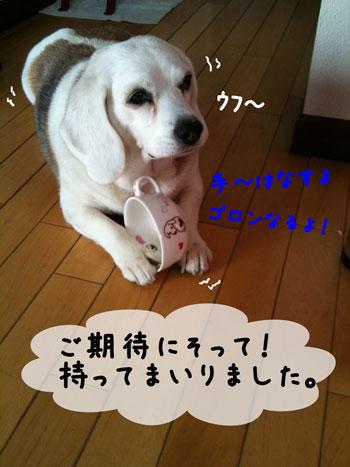 4_20100328170401.jpg