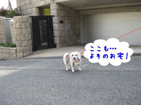 4_20100331165345.jpg