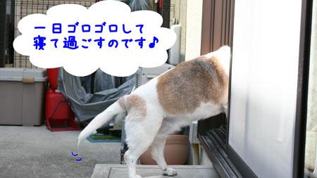 4_20100411204637.jpg