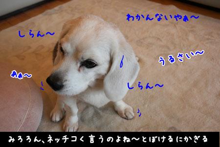 4_20100414164242.jpg