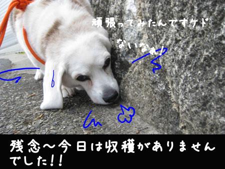 4_20100417164908.jpg
