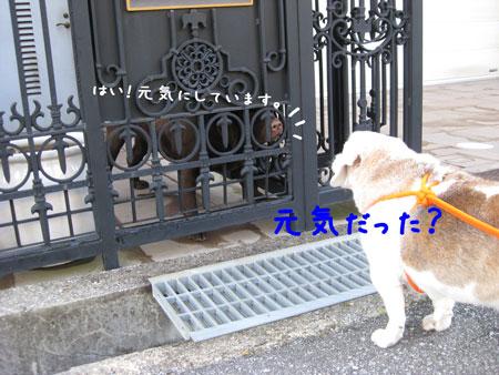 4_20100426173632.jpg