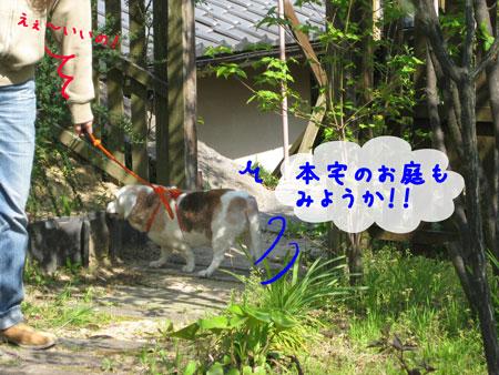 4_20100501213701.jpg