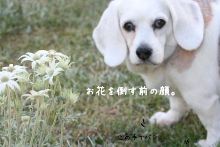 4_20100514170031.jpg