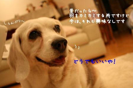 4_20100517215629.jpg