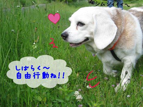 4_20100531164725.jpg