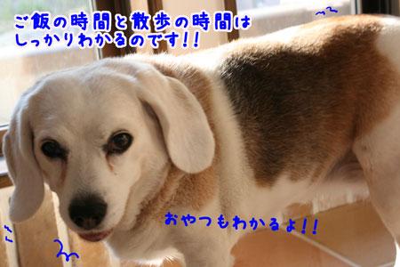 4_20100602180555.jpg