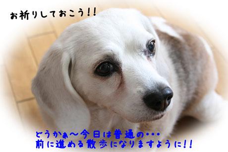 4_20100604140927.jpg