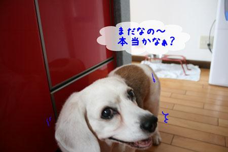 4_20100609145508.jpg