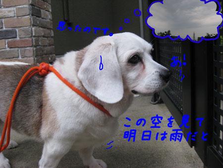 4_20100613165759.jpg