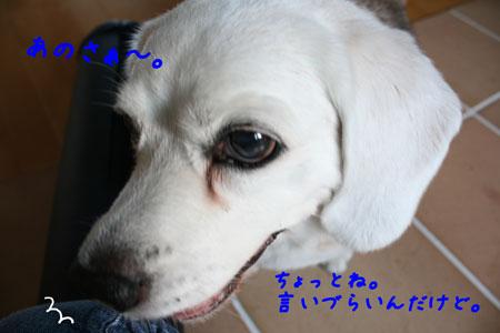 4_20100616180426.jpg