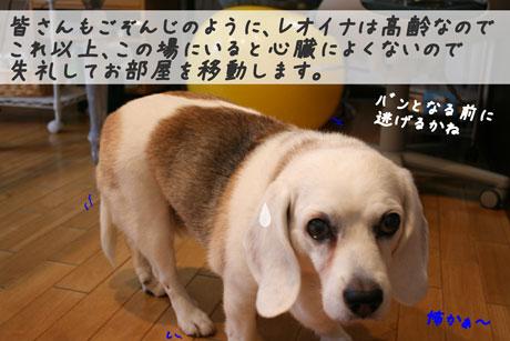 4_20100626153236.jpg