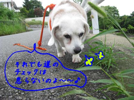 4_20100627143334.jpg