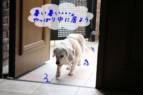 4_20100628163747.jpg