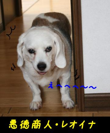 4_20100701133628.jpg