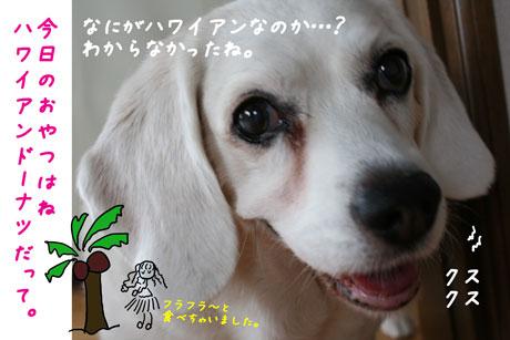 4_20100702160513.jpg