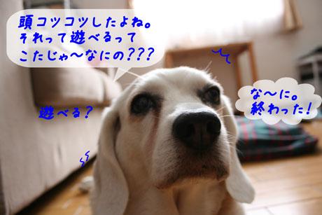 4_20100707152507.jpg