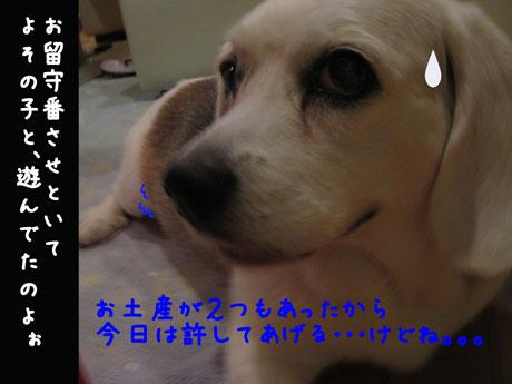4_20100708234238.jpg