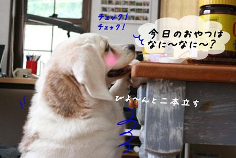 4_20100712154235.jpg