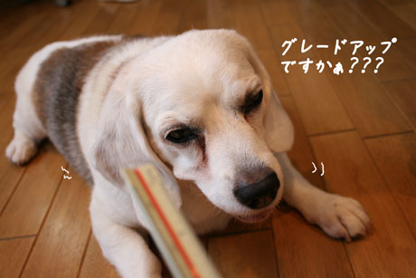 4_20100713150219.jpg