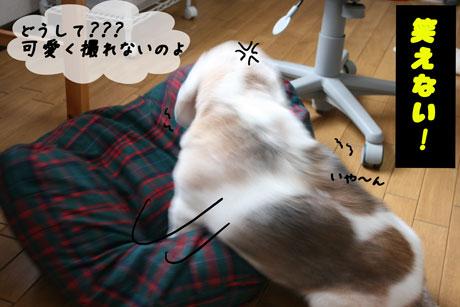4_20100714134607.jpg