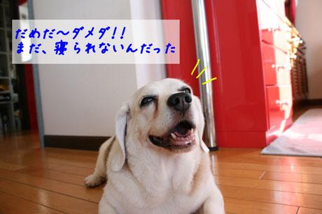 4_20100719132413.jpg