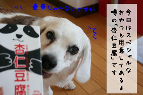 4_20100724171020.jpg